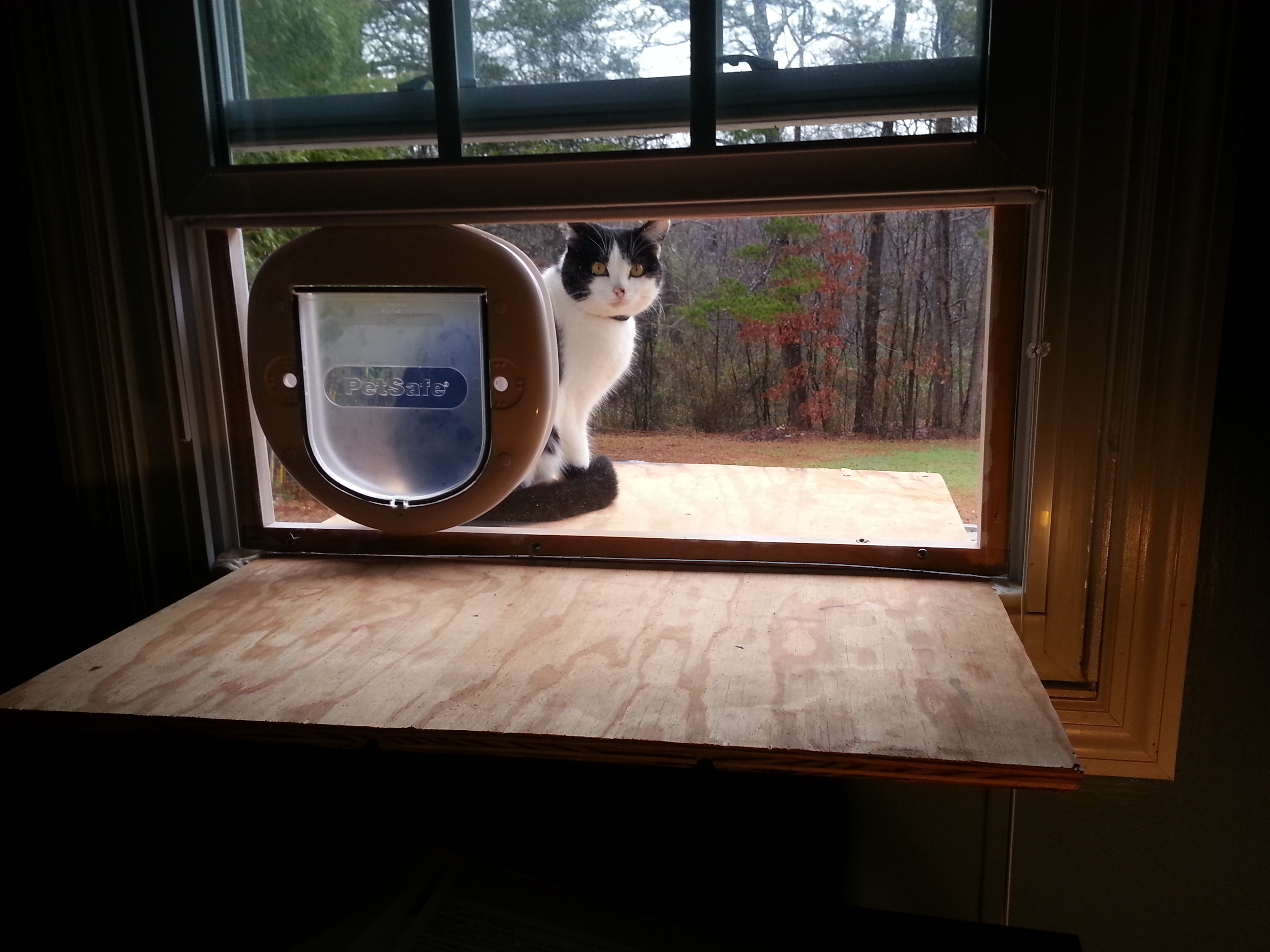 how to keep outside cats away from your house
